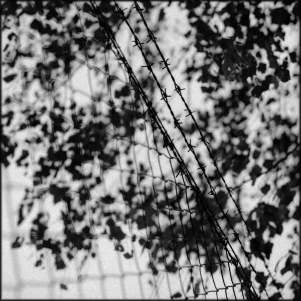 Barbed Wire, Dachau, 2001