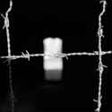 Barbed Wire, Stutthof, 2003